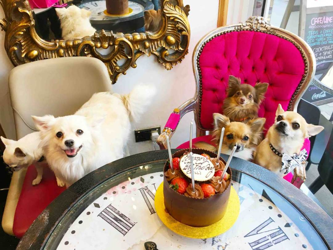 Dog birthday party at Verve London