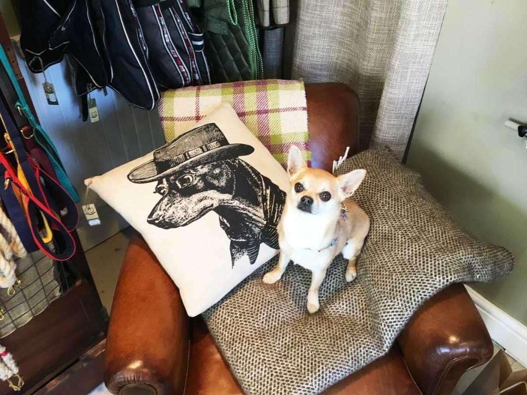 Doggie Apparel shop in Margate