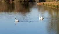 FONTHILL LAKE BEFORE