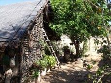 Vivienda guarijía en Guajaray
