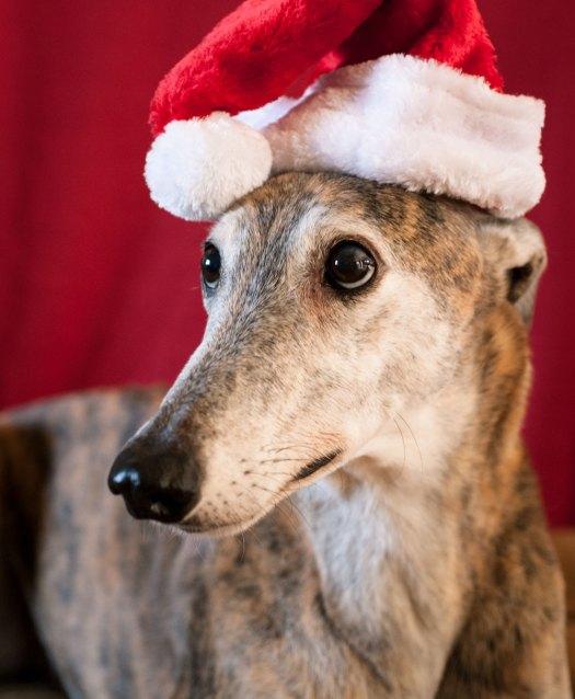 Otis Christmas 2014