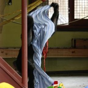 Jamie putting cloth over head