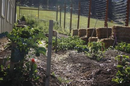 gardens-compost-bins_web_mg_2074