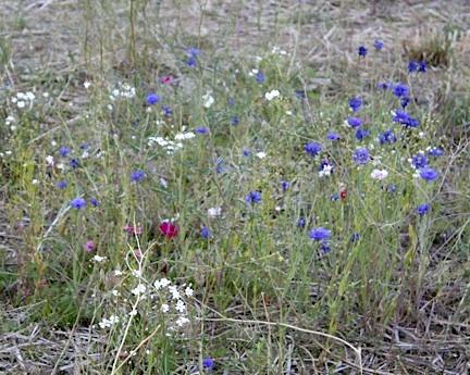 web-wildflowers-volunteer-work-party_mg_2866