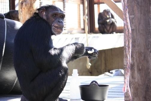 Jamie greenhouse platform wash onion water bucket resized_MG_5491