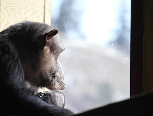Negra gazing outside