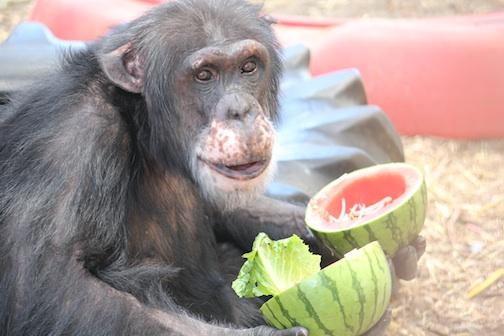 web Burrito watermelon food eat forage outdoor area IMG_4678