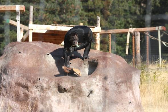 Jamie climb down treat rock