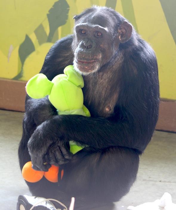 Jamie hug stuffed animal