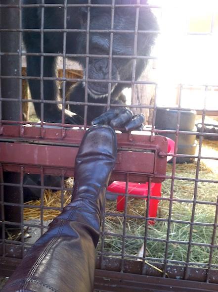 Jamie inspecting diana's boot