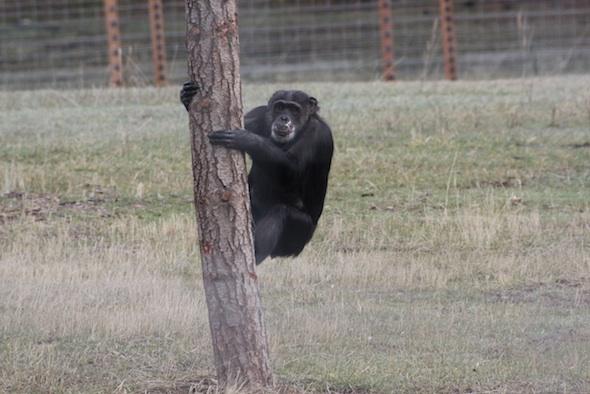 web Missy climb tree post YH IMG_0927