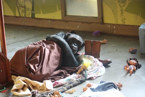 web jamie lay in nest sheet blanket troll boot enrichment pr IMG_0709