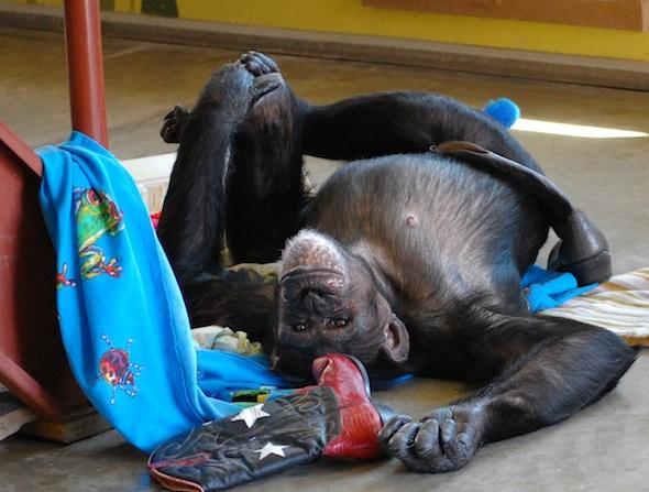 resized FB web Jamie nest boots enrichment lay on back yoga cute playroom DSC_0127