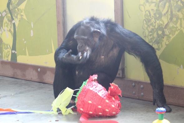 web jamie pinata forage eat birthday party pr IMG_1819