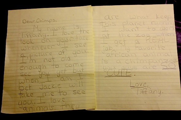 letter to the chimps