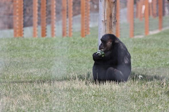 web Negra sit by hammock forage greens YH IMG_1422