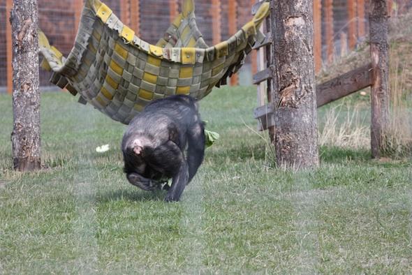 web Negra walk fast mouthful of greens hammock YH IMG_1373