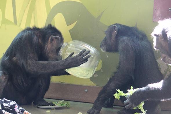 web annie drink foxie peer bucket of water st patrick's day PR IMG_4872