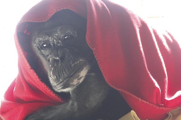 negra under red blanket 1