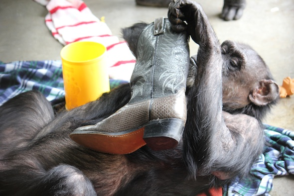 web Jody lie on back inspect boot nest playroom PR IMG_6878