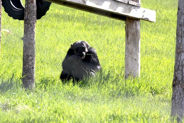 web negra eat green grass YH IMG_7019