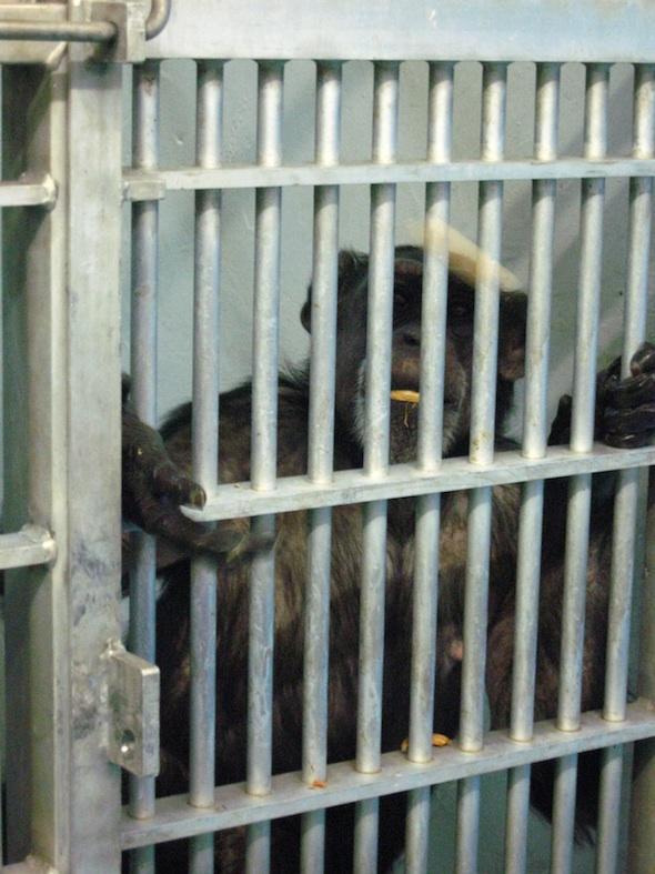 Jody in buckshire cage