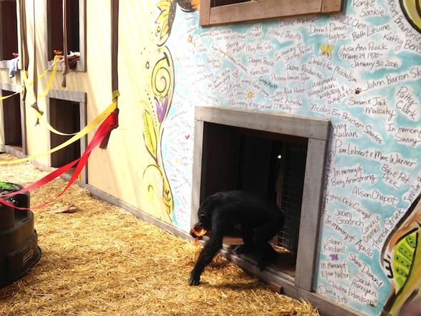 web Foxie drink margarita smoothie cinco de mayo party greenhouse GH IMG_6488