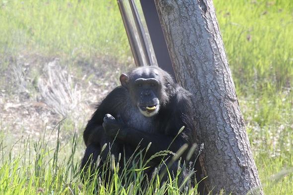 web Negra sit in cabin orange peel in mouth look at camera YH (ek) IMG_8916