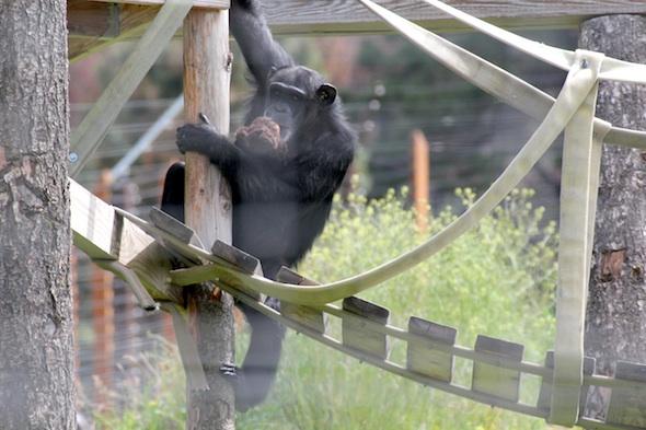web foxie climb post bridge dora YH (kd) IMG_9033