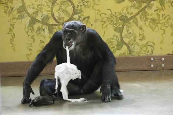 Missy biting on towel