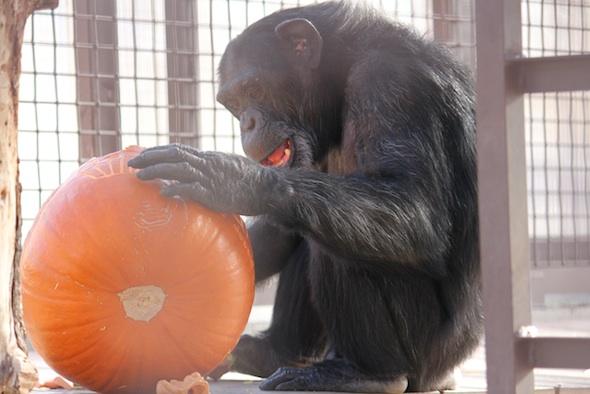 web_Foxie_pumpkin_birthday_halloween_party_GH_ek_IMG_5748