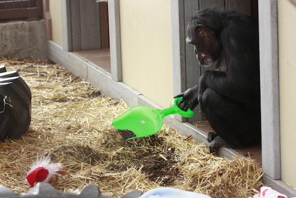 web_Jamie Christmas dig with new shovel enrichment_MG_2547
