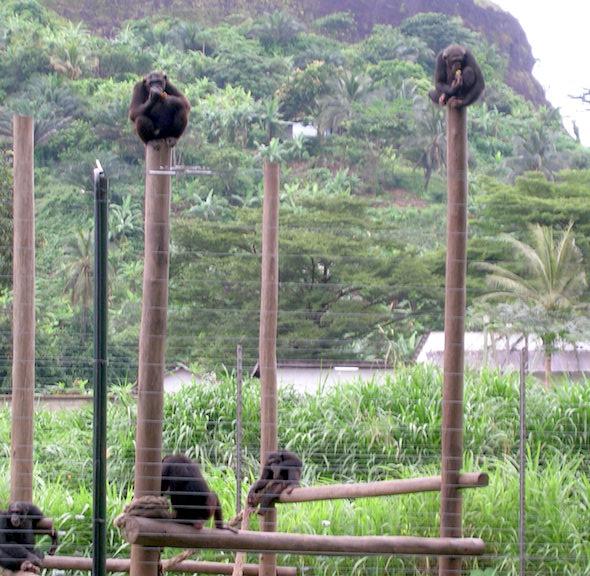 chimps in africa sanctuary3