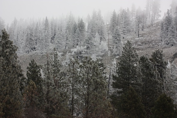 hoarfrost above young's hill
