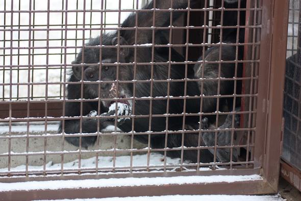 web_missy_hang_on_fencing_eat_snow_YH_raceway_dm_IMG_6990