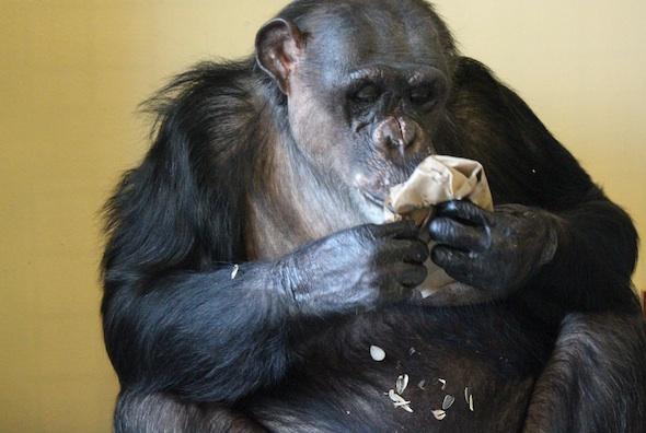 Negra eating night bag