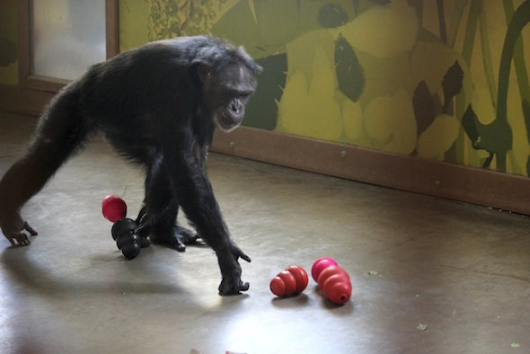 web_jamie_hoard_carry_kongs_connected_forage_PR_dm_IMG_9250