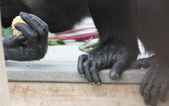 Annie hand, Jamie feet