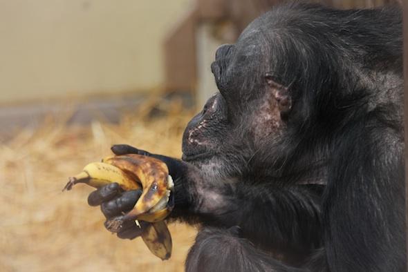 web_Negra_hold_bananas_GH_ek_IMG_0072