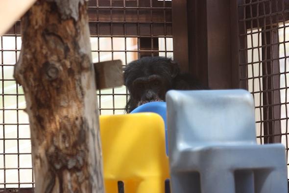 web_Burrito_peek_over_chair_GH_ls_IMG_1183