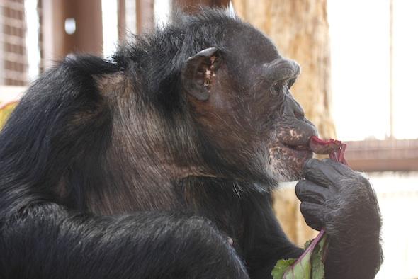 Jamie eating beet in profile