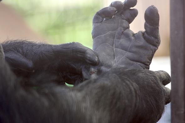 web_Missy_squeeze_jody_foot_wound_GH_jb_IMG_0825