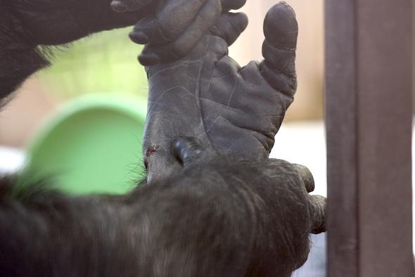 web_Missy_squeeze_wound_jody_foot_GH_jb_IMG_0823