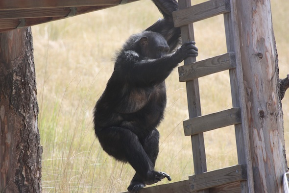 web_Negra_climb_ladder_forage_YH_ek_IMG_0987