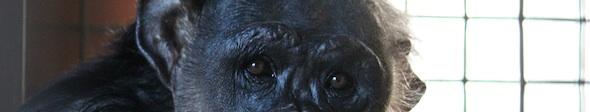 web_Negra_cropped_good_closeup_look_at_camera_FR4_kh_IMG_5753