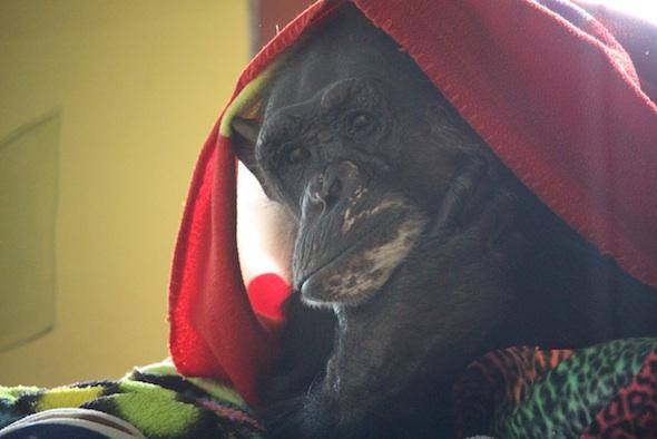 web_Negra_blanket_nest_catwalk_look_at_camera_PR_ek_IMG_1617