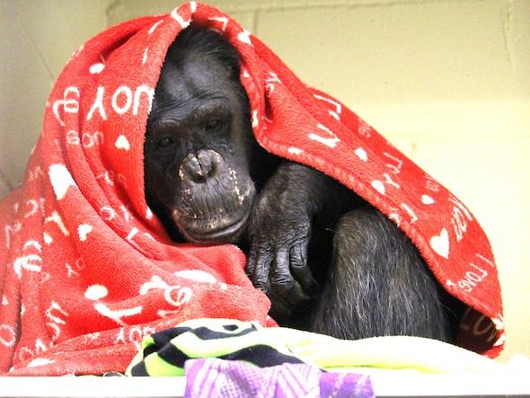 web_Negra_sit_ledge_blanket_over_head_body_Frs_kh_IMG_0795