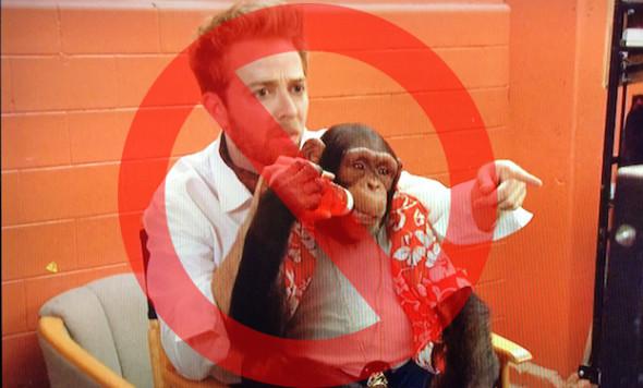 big-time-chimp-on-lap-nosign