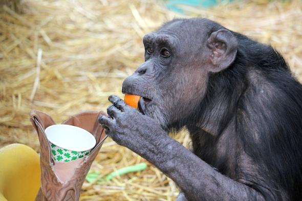 web_jody_eat_orange_forage_st_patrick's_day_party_gh_ek_IMG_9767
