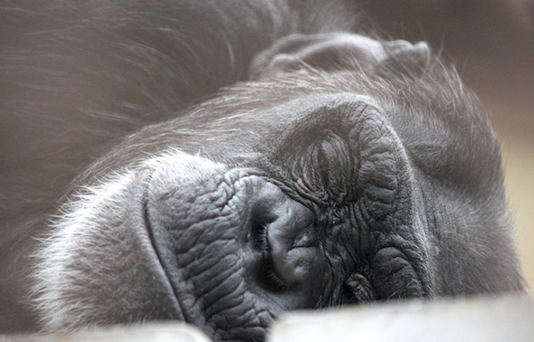 web_foxie_face_sleeping_kd_IMG_1708